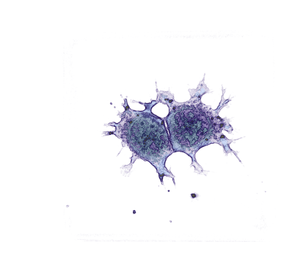 Stem Cells mitosis - label-free live cell imaging