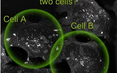 Cell fate challenge: Can you predict the fate of cells before it happens?