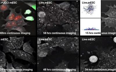 Nanolive at ISSCR June 20 to 23 in Melbourne, Australia