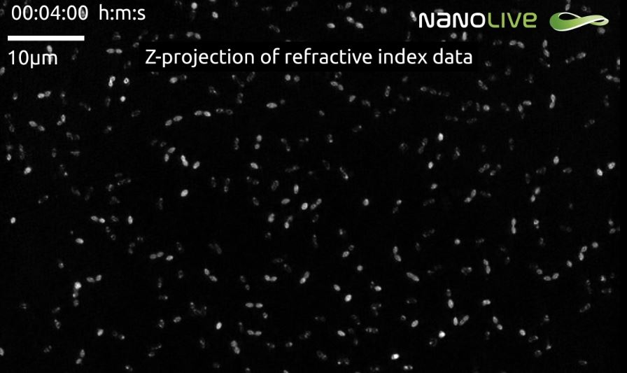 Nanolive label-free live cell imaging weighs in on the fight against antibiotics resistance
