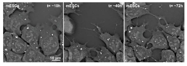 Application Note: Growing and Filming Stem Cells with the 3D Cell Explorer