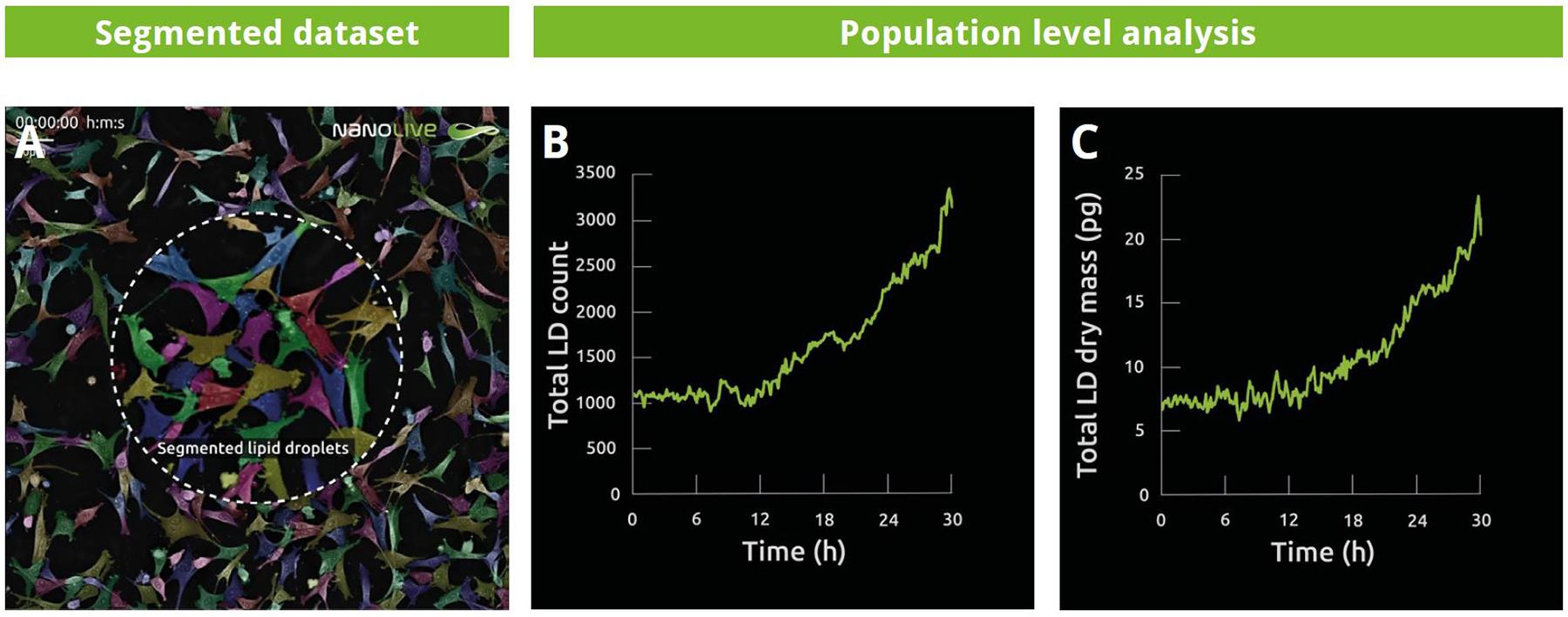 Image 1 - Quantifying LD dynamics at population level