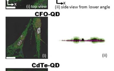 Two new live cell imaging publications with the 3D Cell Explorer