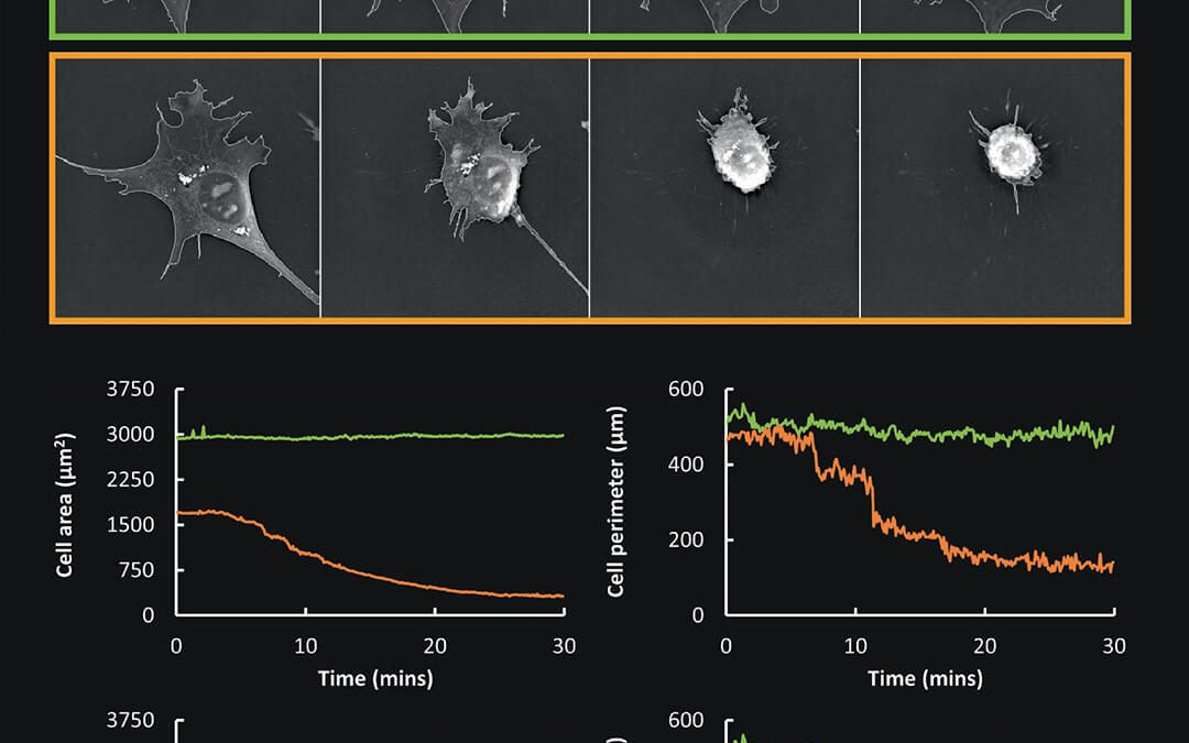EVE Analytics for the 3D Cell Explorer-fluo