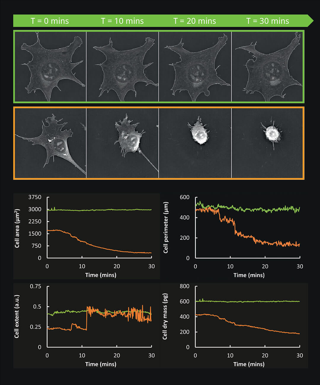 EVE Analytics for 3D Cell Explorer-fluo