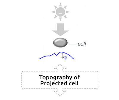 Topography of Projected Cell