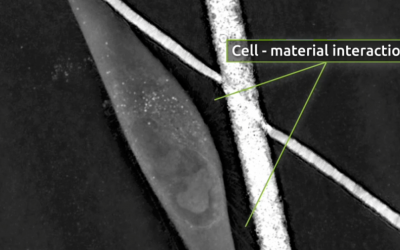 Is surface roughness the key to improving bone scaffolds?