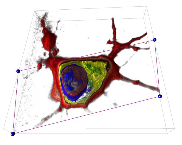 Try the 3D Cell Explorer for FREE! Hurry up, places are limited!