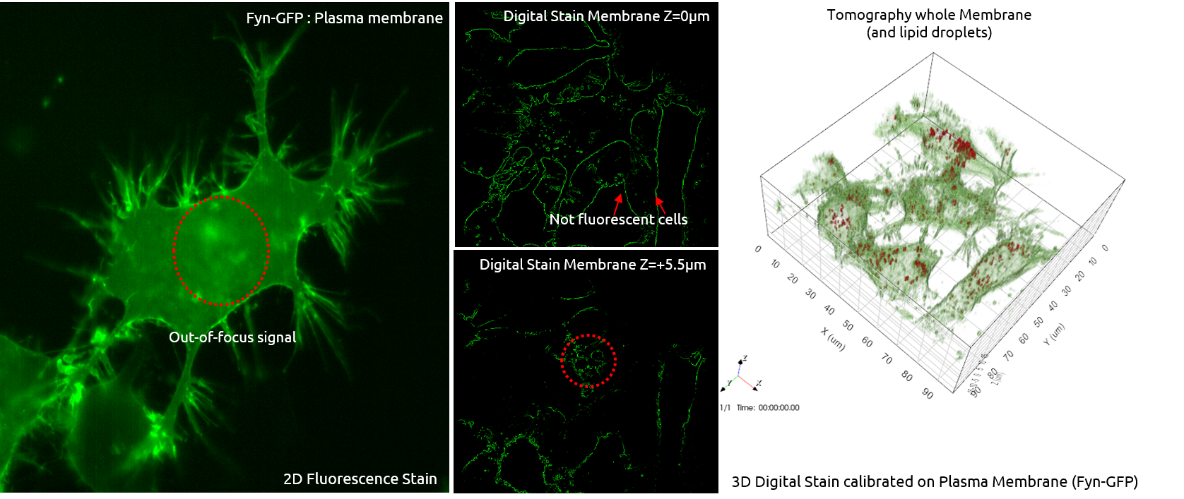 Live Cell Imaging Microscope 3d Explorer Fluo Looking Inside Plant Diagram Step 3 Another Reduce Artefacts Get More And Reliable Measurements Identify Out Of Focus Signals Recover Lost Information Achieve Homogeneous Staining