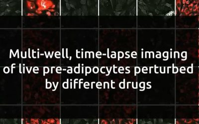 New Application Note: Investigating multiple drug-induced perturbations with Nanolive's Automated live cell imaging