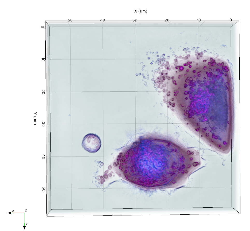 Live T-cells in 3D