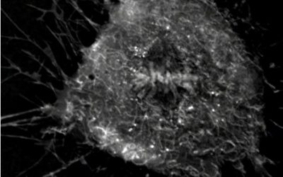 Spectacular Mitosis in Mesenchymal Stem Cells