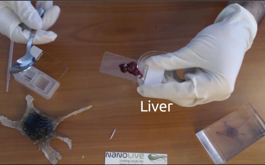 Tasty liver cells