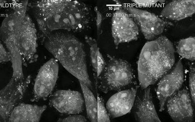 Nanolive imaging used to distinguish morphological traits of mutant cancer cells
