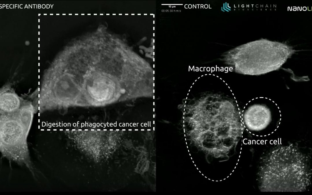 Is it possible to restore phagocytosis of cancer cells?