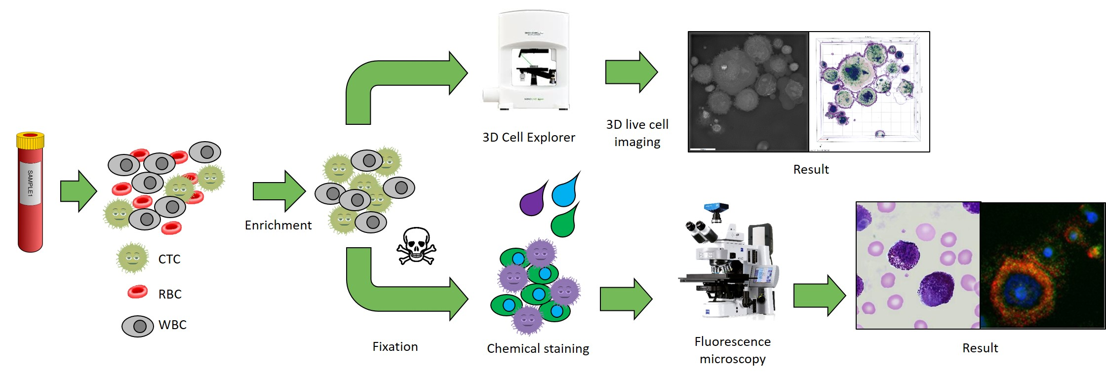 Work flow of CTCs enrichment, detection and characterization