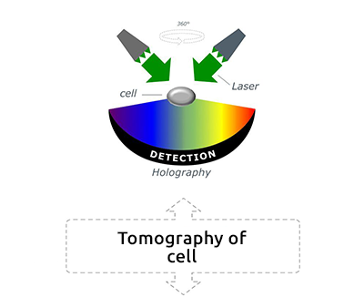 Tomography of cell