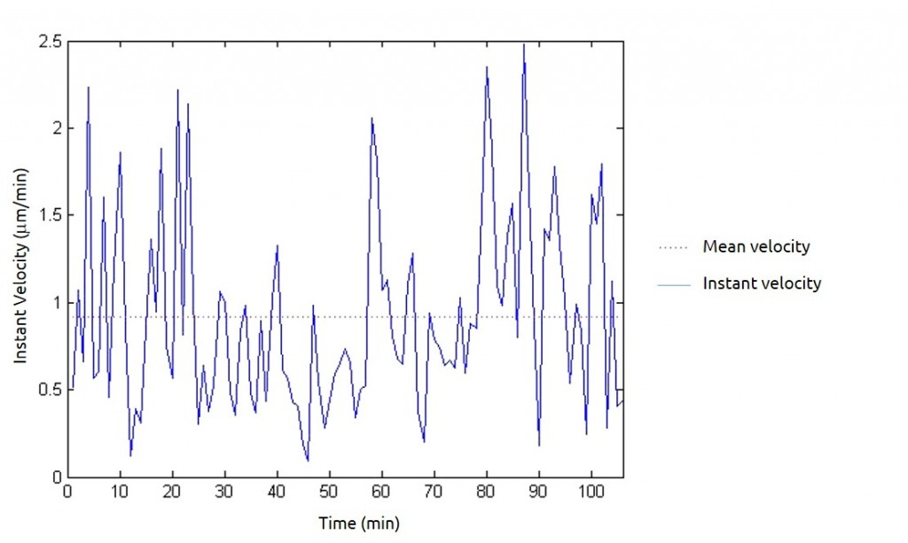Instant velocity and mean velocity of a cell during its migration